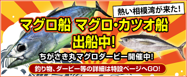 maguro2017_2.jpg
